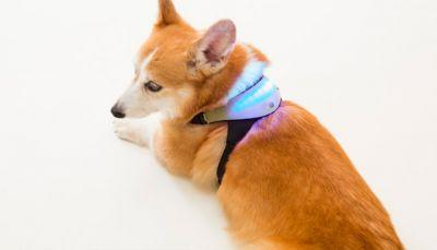 "Intuitive ""Mood Collar"" Changes Colors According To Dog's Emotions"