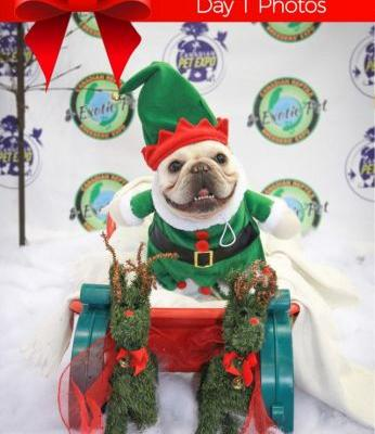 What great photos from Day 1 at Canadian Christmas Pet Expo 2017