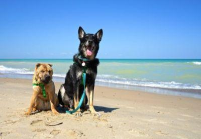 Indiana's Top Pet Friendly Attraction: Indiana Dunes Lakeshore