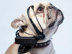 "The Cautionary Tale of ""No More Woof,"" a Crowdfunded Gadget to Read Your Dog's Thoughts"