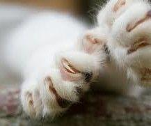 Paws and Claws / Right or Left?