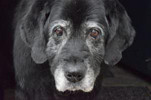 5 Things Your Senior Dog Needs More Of