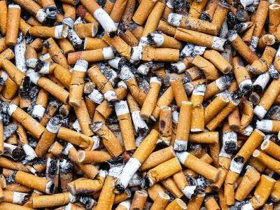 Study: Cigarette butts, which accounts for the world's most man-made litter, impact plant growth
