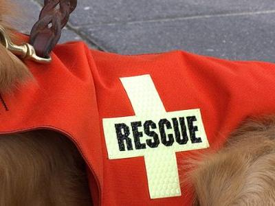Mexico City's Bravest Dogs Save Numerous Lives During Recent Earthquakes