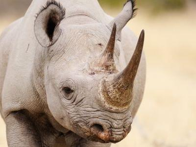 Rare treats: The 6 best places to still see rhinos in the wild