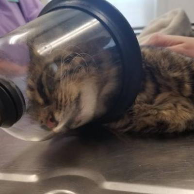 Ohio humane society searches for person responsible for lighting firecracker in cat's rectum