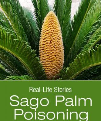 Sago Palm Poisoning: Piper's Brush with Death