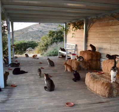 Dream job: A cat sanctuary is seeking a caretaker to live on a Greek island and look after its 55 cats