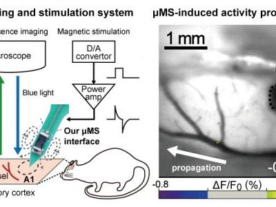 Micromagnetic Stimulation of the Mouse Auditory Cortex In Vivo Using an Implantable Solenoid System