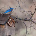 It's Time to Clean Out Your Nest Boxes