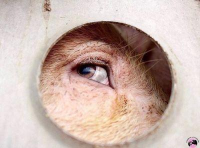 """""""Human-like eyes, destroyed by our long-held lies.""""Words and"""