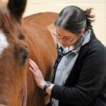 Equine Clinical Case Challenge - Lethargy