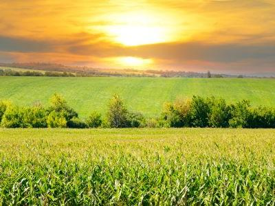 Buy GMO to Sustain the Food Supply