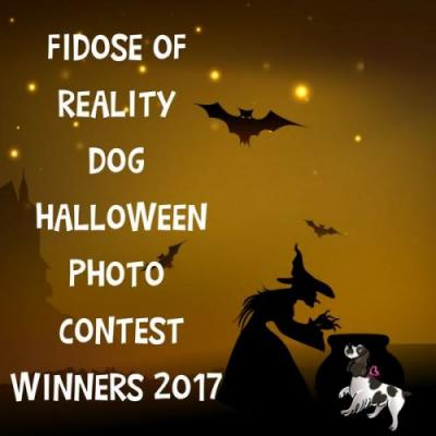 Dog Halloween Photo Contest Winners 2017