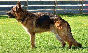 Is Your Dog Shedding Like CRAZY? This Can Help!
