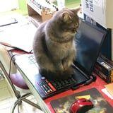 A Man Filed an HR Complaint Against His Cat While Working From Home - and It Rings So True