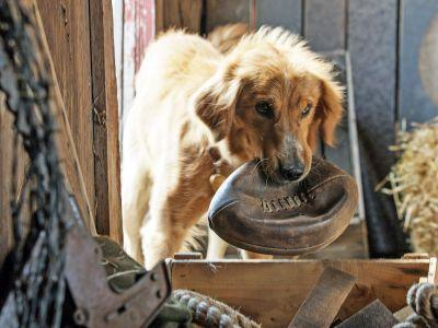 A Dog's Purpose Set Video Shows Dog Being Forced Into Rough Water