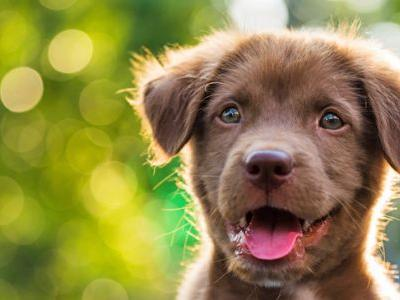 Omega-3 for Dogs: What Are the Benefits of Omega-3 for Dogs?