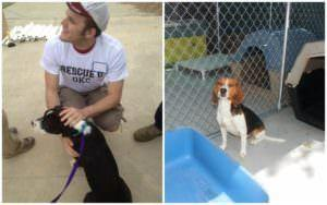 Charity Gathers Volunteers To Help Shelter Accommodate Influx Of Pets