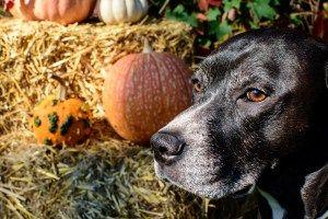 Can Dogs Eat Turkey? Your Canine's Guide to Thanksgiving Dinner