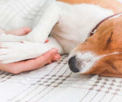 Do Dogs Have Nightmares? Let's Talk Dogs and Dreaming