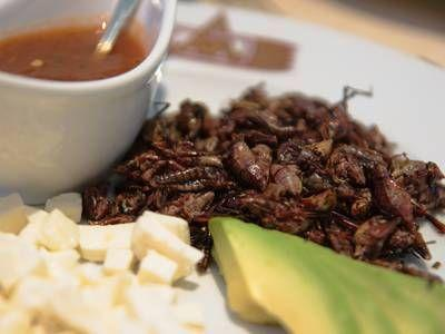 Why don't you want to eat insects?