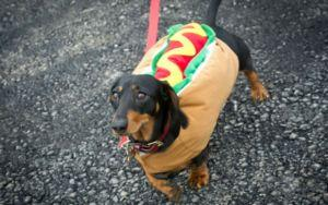 Over 1,200 Dachshunds Create Quite The Spectacle All For A Good Cause