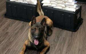California Police Dog Makes Huge Drug Bust First Day On The Job