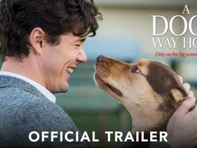 A Dog's Way Home Movie Trailer