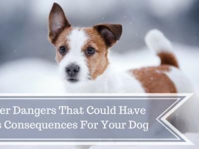 5 Winter Dangers That Could Have Serious Consequences For Your Dog