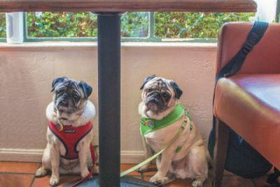 The Best Dog-Friendly Restaurants Around the Country