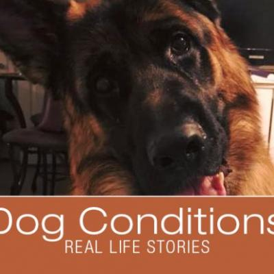 Cooper: Gastric Dilatation and Volvulus Survival Story and a Warning