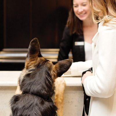 The Top Dog-Friendly Hotels Around the Country