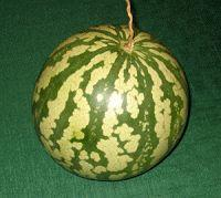 Citron melon or citron watermelon - to make mock candied citron