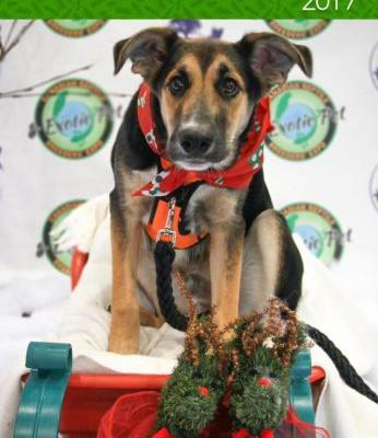 Dog-friendly December 2017 Events