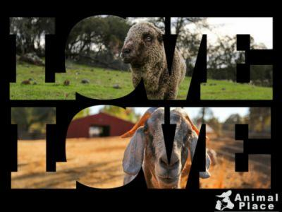Spread love, not violence, to animals like Gwen and Annie