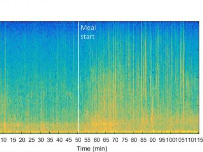 Feasibility of Early Meal Detection Based on Abdominal Sound