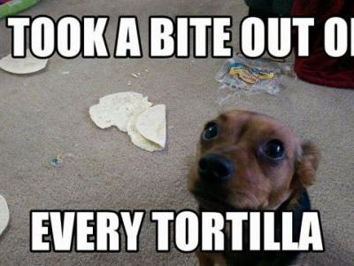 Sheldon, the Tortilla Taste-Tester