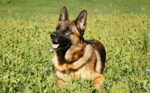 10 Dog Breeds That Aim To Please Their Humans