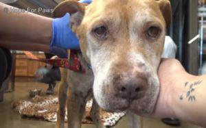Rescuers Discover That Dog Abandoned In Empty House Battled Hunger By Eating Rocks