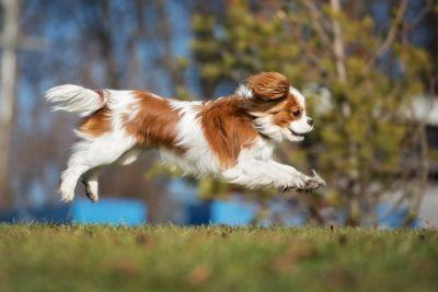 The 10 Dumbest Dog Breeds