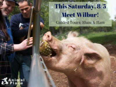 Don't miss your chance to feed Wilbur yummy treats - and