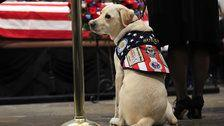 Sully, George H.W. Bush's Service Dog, Takes On New Role Helping Military Patients