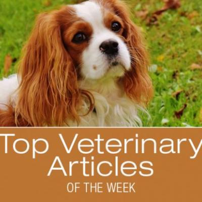 Top Veterinary Articles of the Week: Ear Care, Ramps, and more