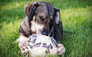 How To Help An Emotionally Traumatized Dog Learn To Play