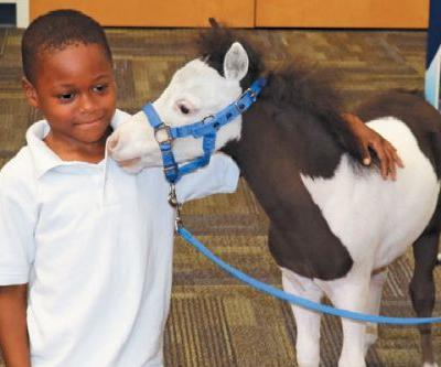 Sirius and Mercury: The Unlikely Friendship Between a Dog and a Miniature Horse