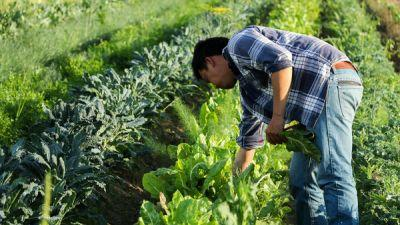 Nonprofit Helps California's Asian-American Farmers Grow Their Business