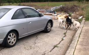 Viral Video Of Dog Dumping Convinces The Culprit To Turn Herself In
