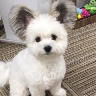 The internet needs more answers about this dog that has adorable ears