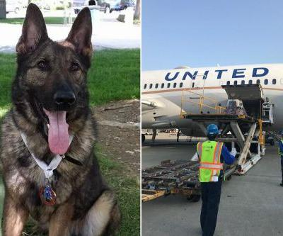 United Airlines mistakenly sends dog to Japan instead of Kansas